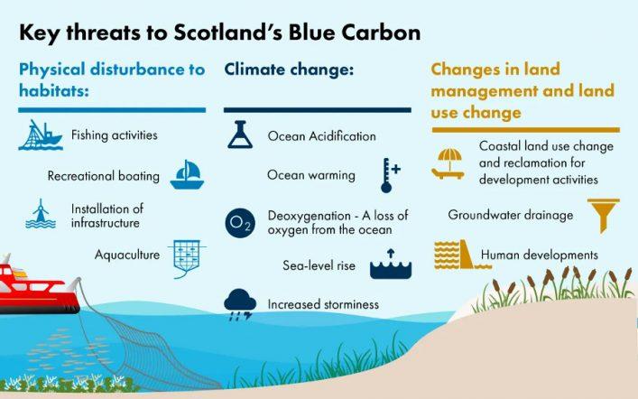 Blue Carbon