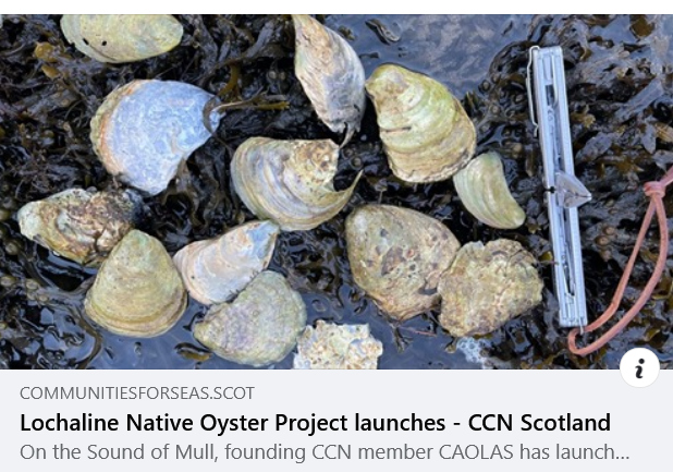Native Oyster and seagrass restoration