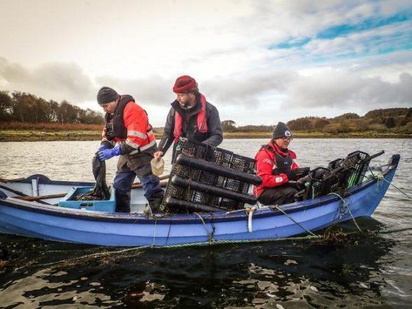 Seawilding, Sea loch, Seagrass