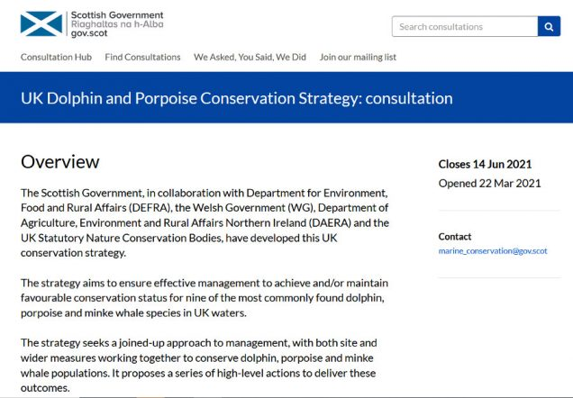 Dolphin and porpoise consultation