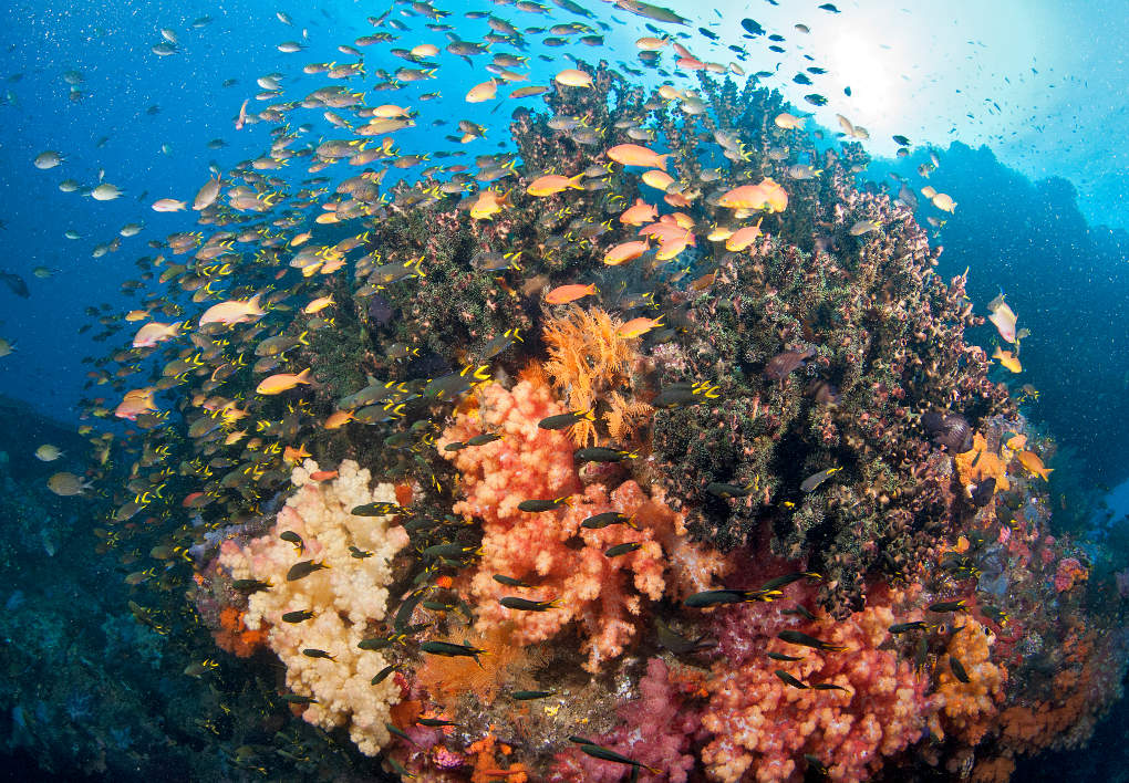 coral reefs climate change