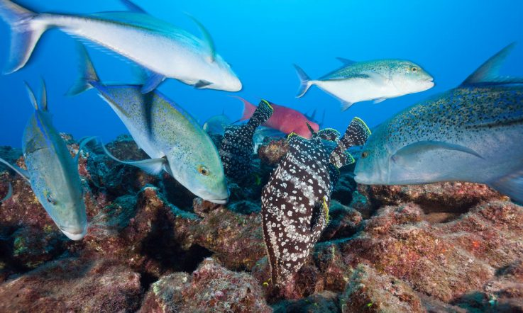 Mexico ocean reserve