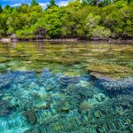 Coral Ocean, biodiversity targets