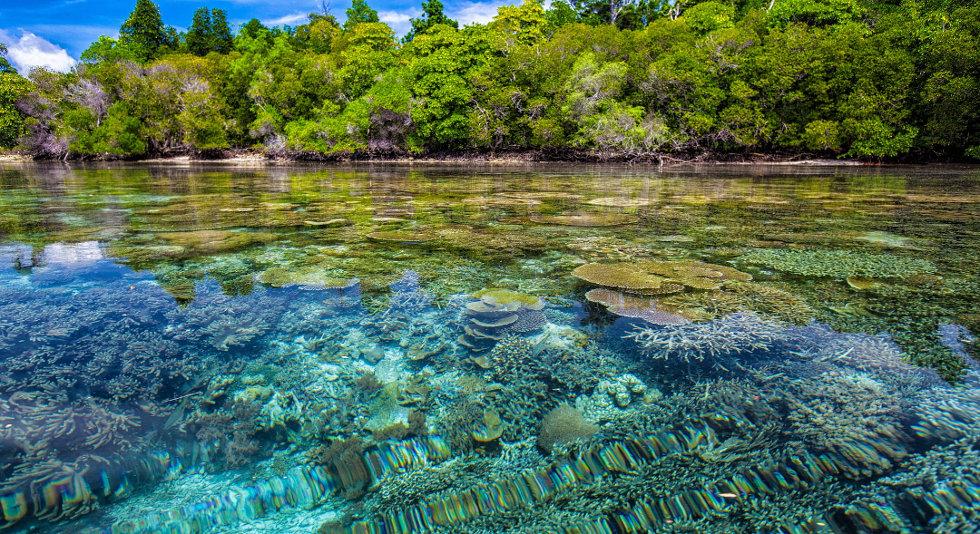 Coral Ocean