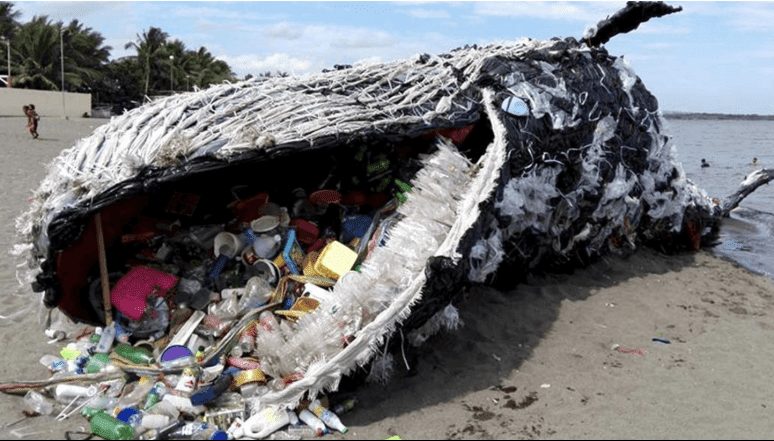 Plastic, whale, sea change, election