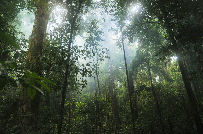 rainforst conservation community UN