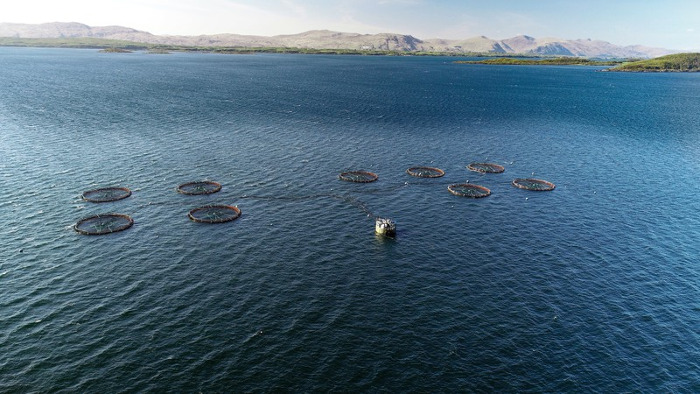 SEPA fish farm salmon