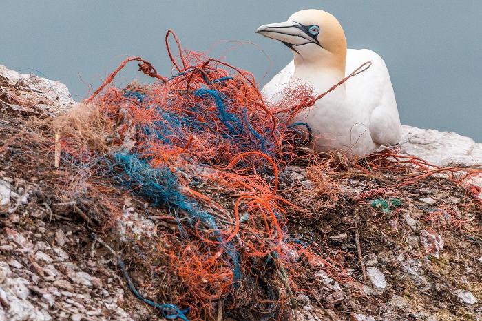 Plastic marine seabird
