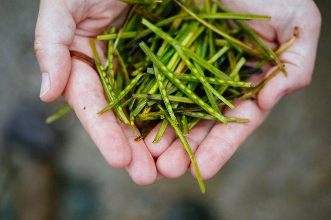 Seagrass restoration