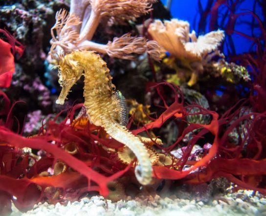 seahorse sponge cambodia