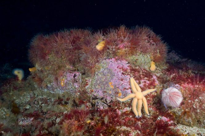 Wester Ross MPA