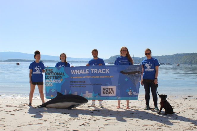 whale track HWDT