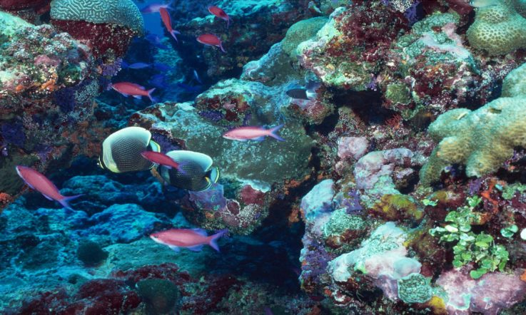 coral reef fish plastic