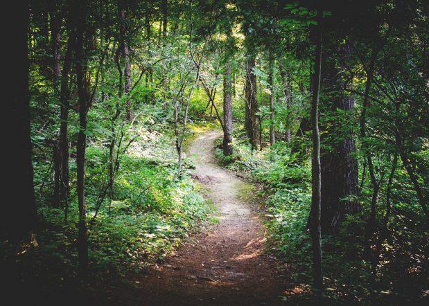 forest, woodland, nature, netzero
