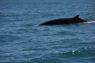 Whale MPAs