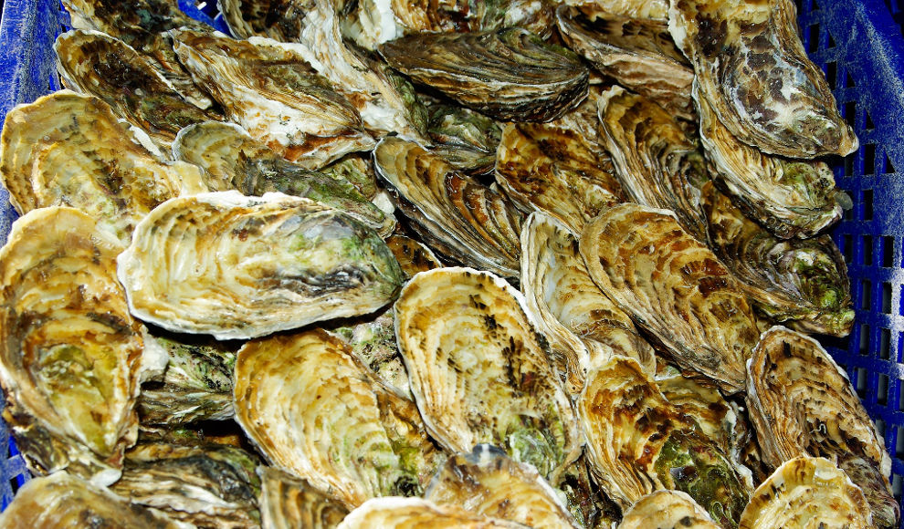 North Sea Oyster