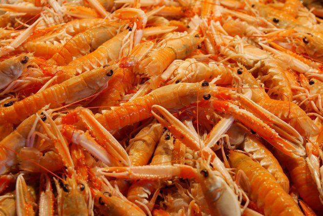 prawns seafood bycatch