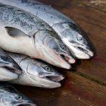 Salmon, fish farm, ADDs, acoustic deterrents