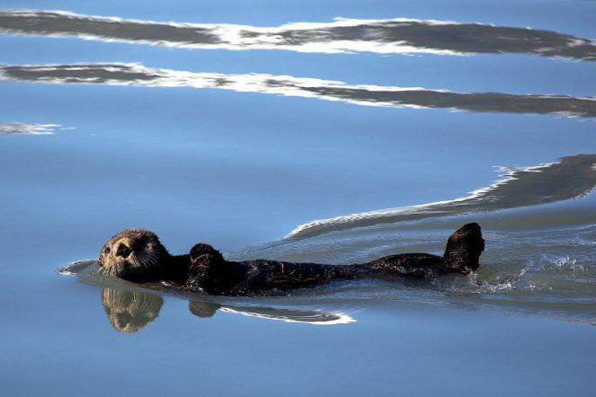Otter, biodiversity targets