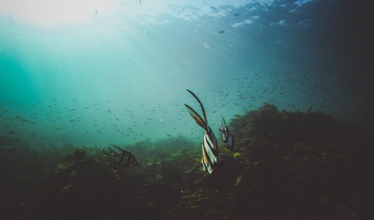 seagrass, Highly Protected Marine Areas
