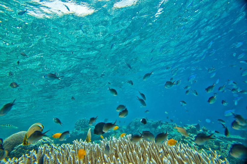 Fish MPAs ocean